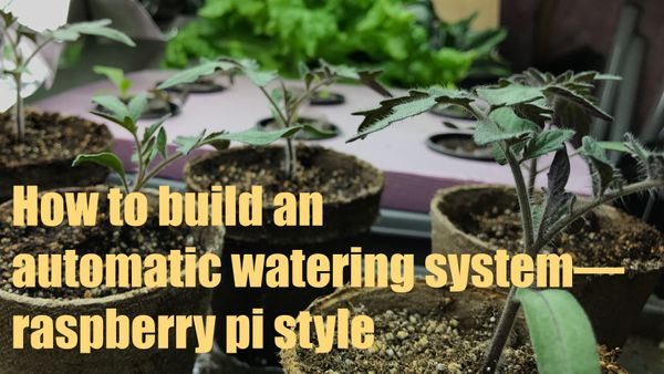 How to build a self watering system for seedlings